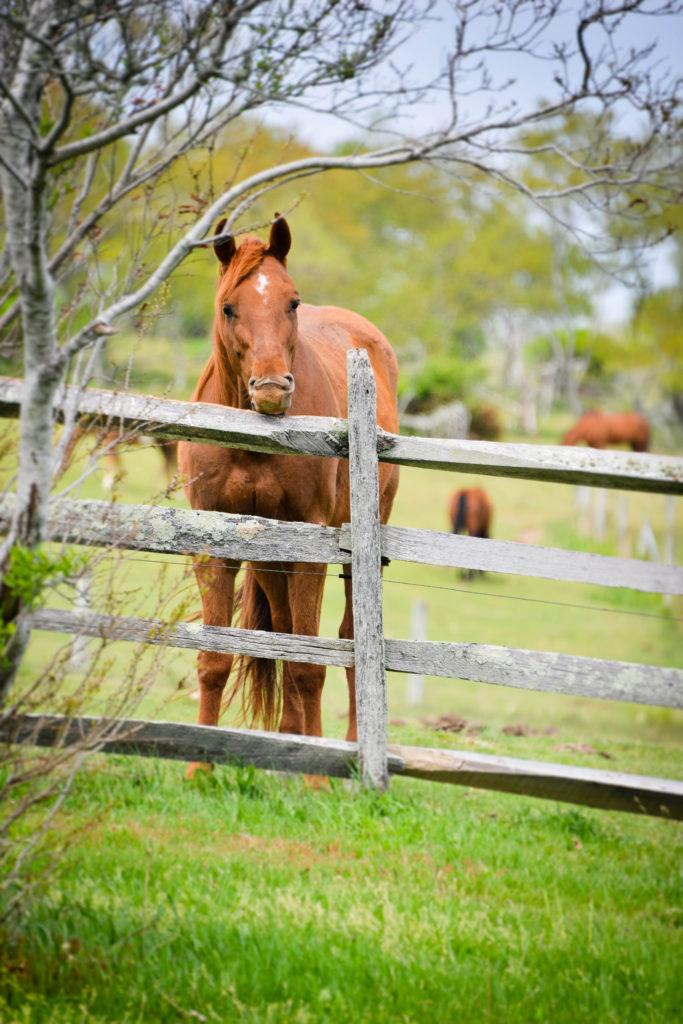 Mountauk Horse
