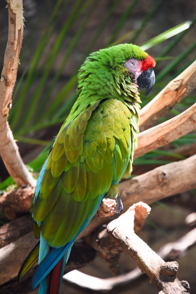 Palm Beach Zoo Parrot