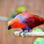 Sarasota Jungle Gardens Parrot