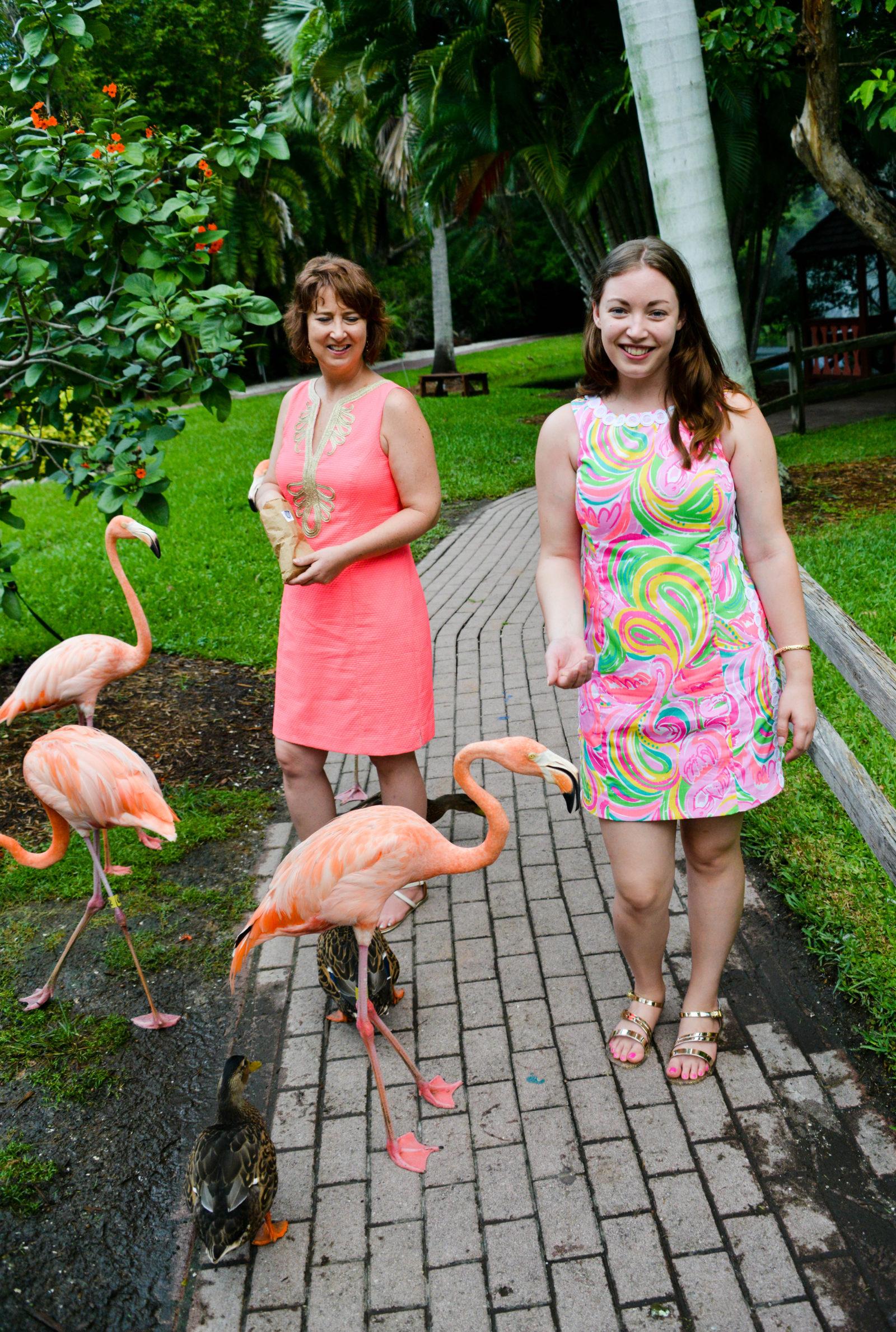 Sarasota Jungle Gardens - Flamingo - Lilly Pulitzer