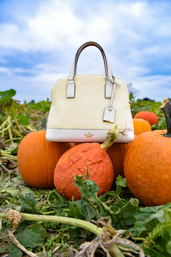 Fall Fashion Pumpkin Patch