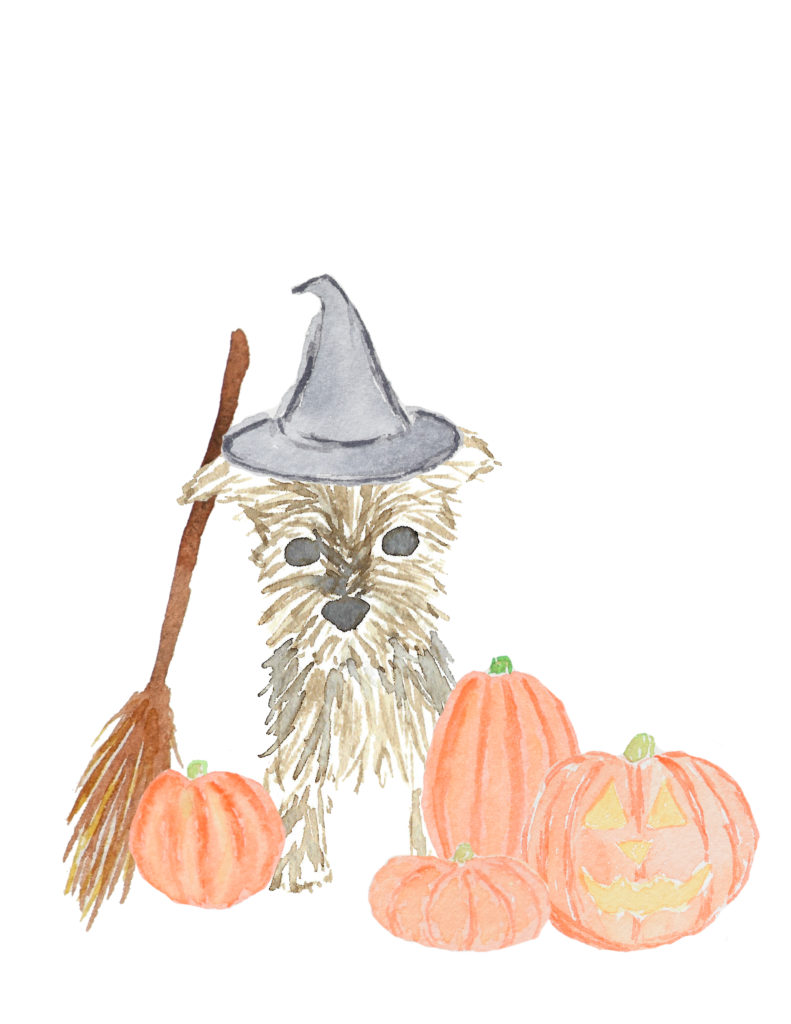 Yorkie Halloween with Witch's Hat, Broom and Pumpkins