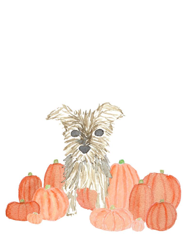 Yorkie Pumpkin Patch